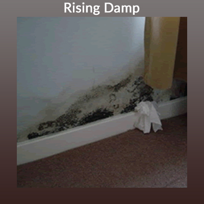 Picture of Rising Damp